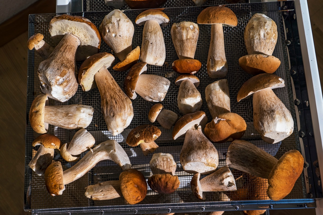 Porcini-mushrooms-lie-on-a-drying-grid-in-the-oven